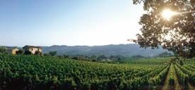 Toscane – land van wijn