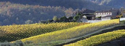 Wijn & olijfolie in de Chianti