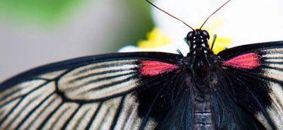 Vlindertuin Lucca